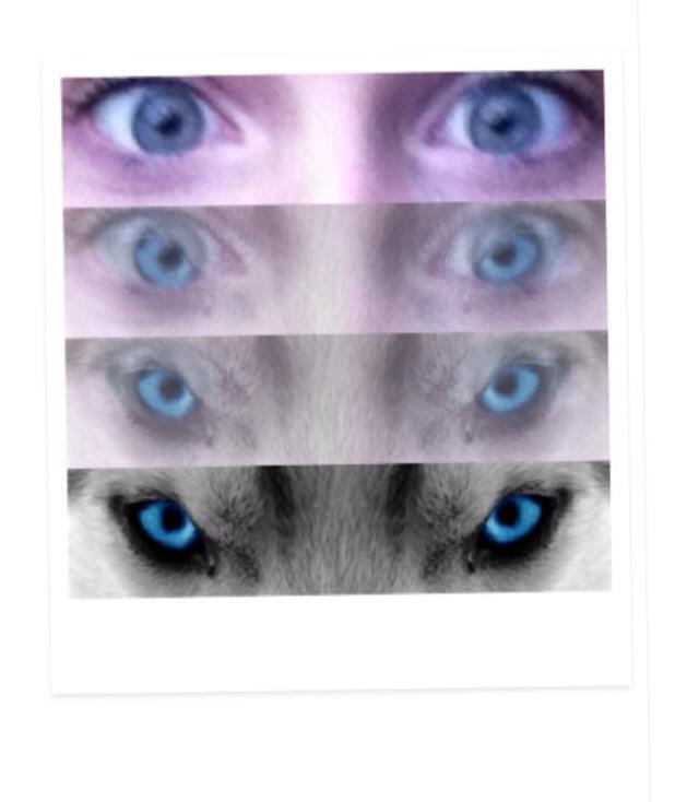 Eyes;p