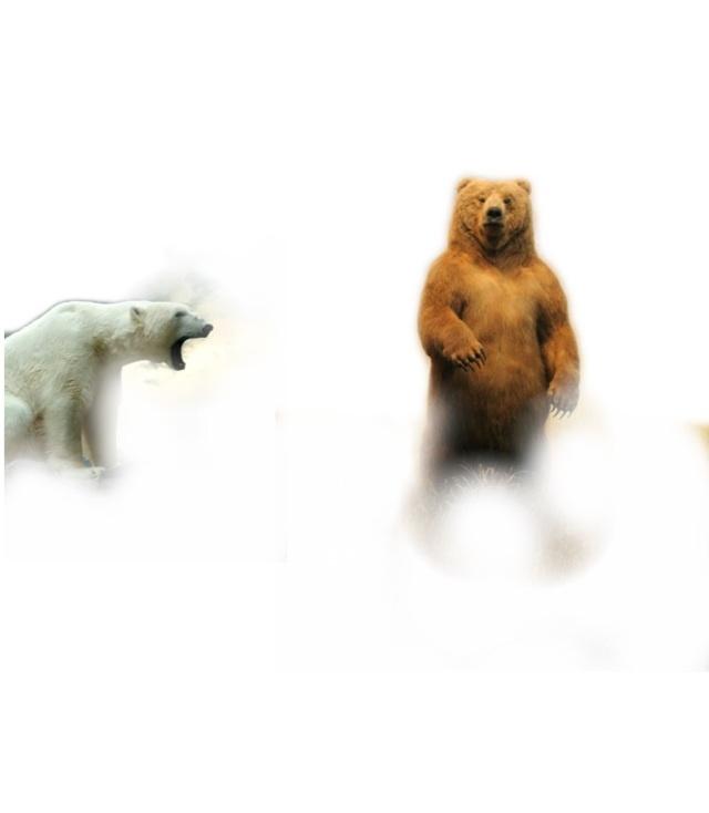 МедведьVsМедведь