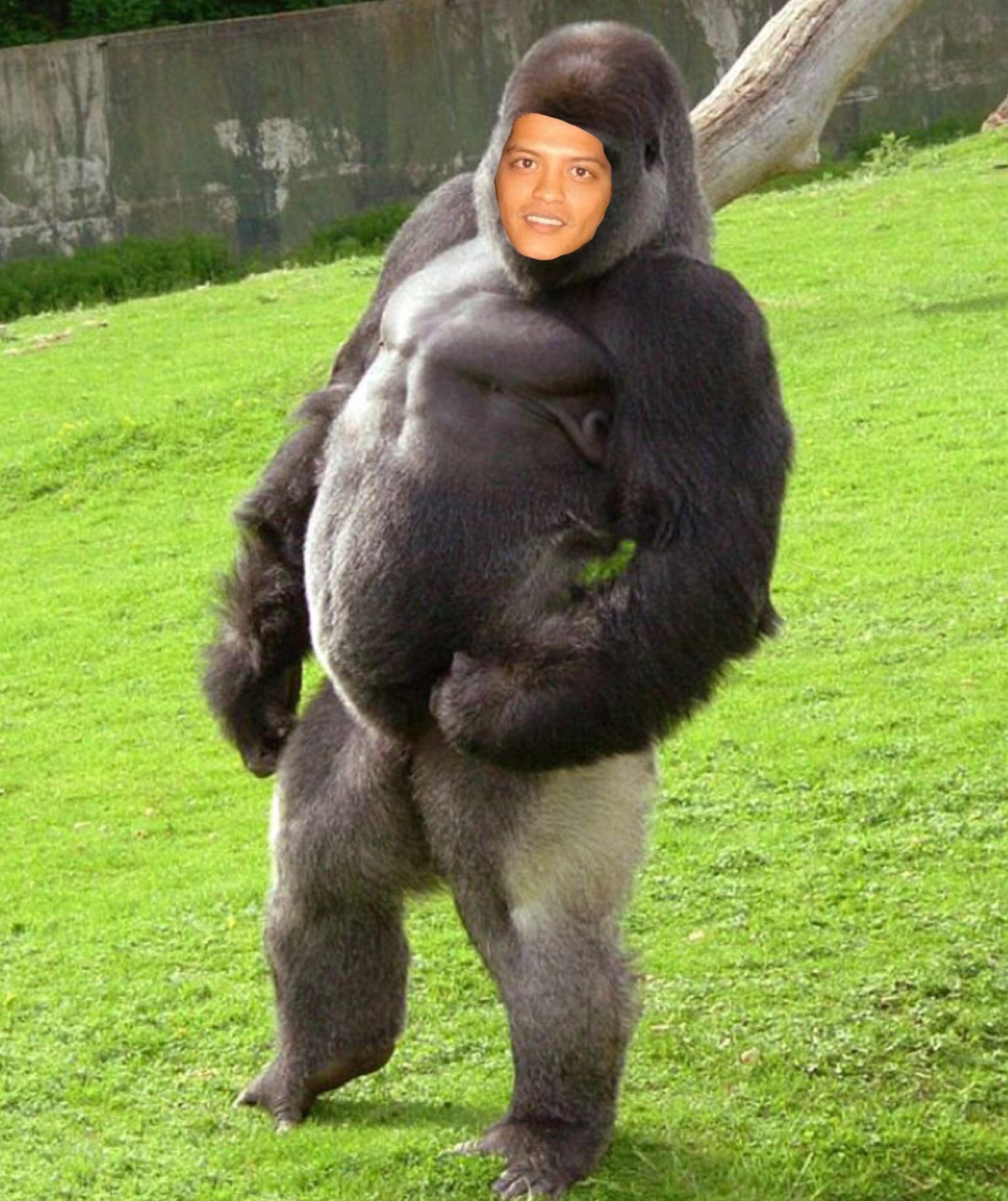 Gorilla penis nackt download