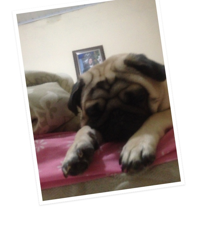 #dog #pug #love